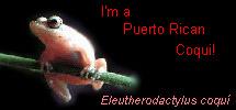 I'm a Puerto Rican Coqui!