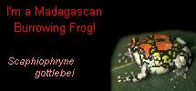 I'm a Madagascan Burrowing Frog!