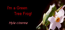 I'm a Green Tree Frog!